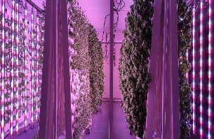 State_of_the_Art_Indoor_Hydroponic_Farm_Fully_Fitted_and_Operational_211202175955