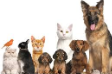 Pet care and pet food ecommerce business looking for investment partner